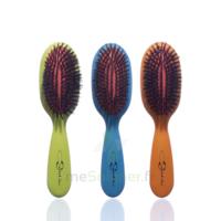 Cartel Brosse Cheveux Pneumatique Sanglier /1 à Andernos